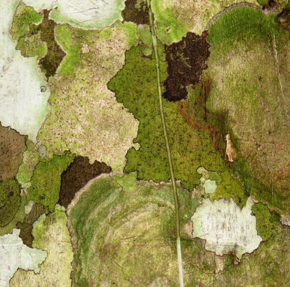 Image of tree bark referenced in the Atlas Concorde USA blog from Laurie Smith
