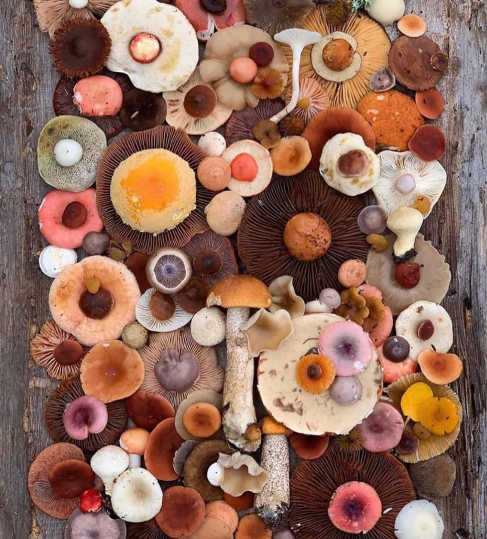 Colorful mushroom image referenced in the Atlas Concorde USA blog from Birgit Klein Interiors