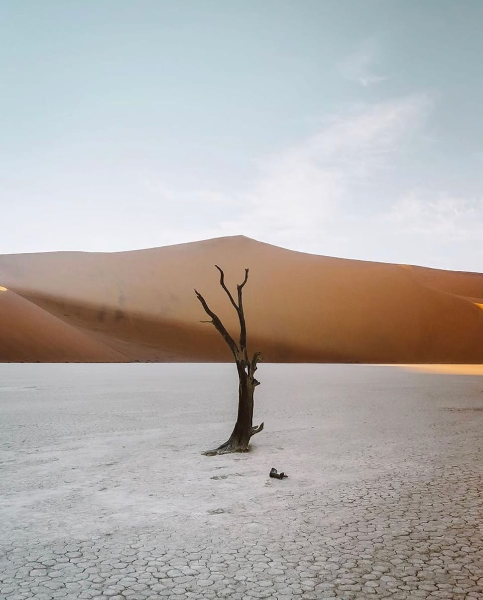 Image of lone tree in the desert referenced in the Atlas Concorde USA blog from Stay and Wander