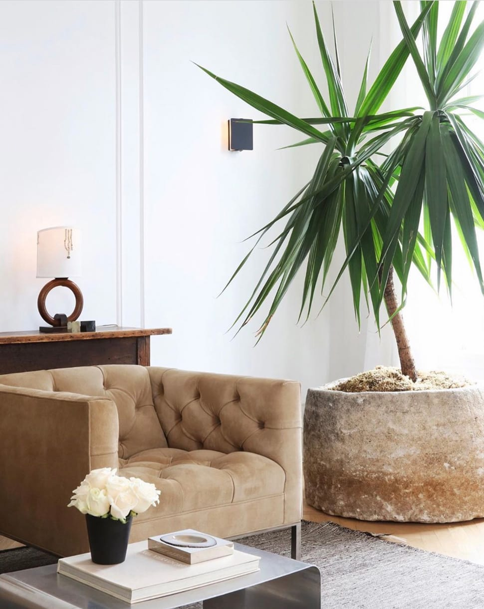 Planted palm image featured in the Atlas Concorde USA blog by Nate Berkus